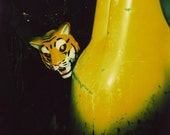 stare, 8x10 archival print photograph of girl in tiger mask, feather boa and vintage 1980s shorts