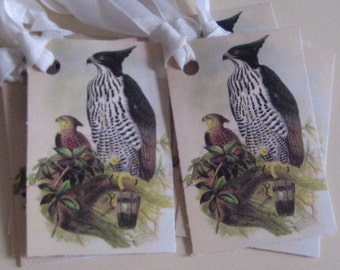Exoctic Birds Gift Tags