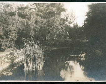 vintage photo Cat tails in Pond beautiful serene photograph