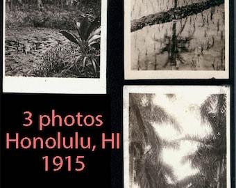 vintage photo 3 Hawaiian Island palm trees rice fields honolulu