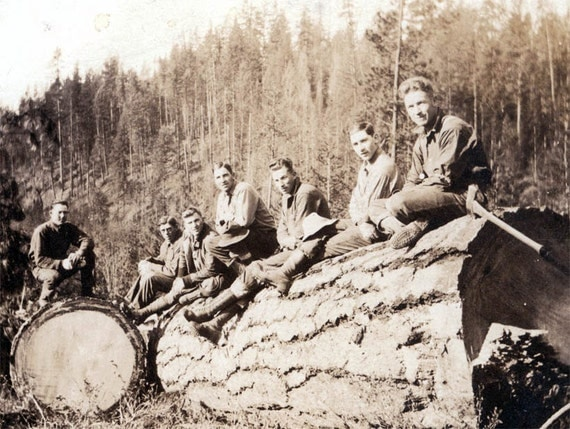 vintage photo Oregon Loggers 1,592 Board Ft in One Cut