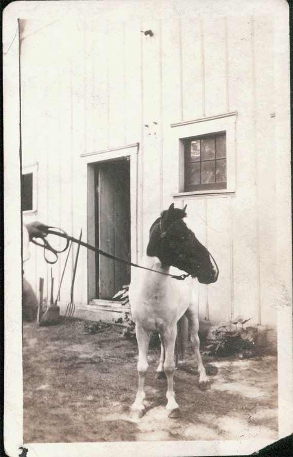 vintage photo Horse Pony who was in the circus Dogs rode on his back