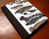Illustrated Animal Journal - Seals and Sea Lions Nature Guide Notebook