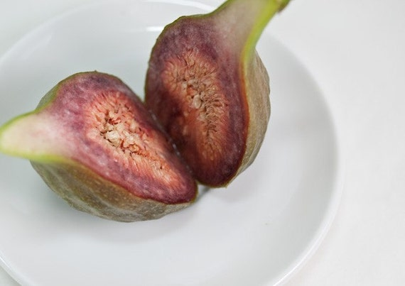 Ficus carica, Fig,  photograph,  5x7, summer colours, seeds