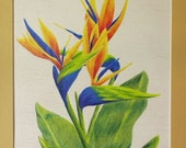 SFA Original 8x10 Colored Pencil Drawing Bird of Paradise Tropical Flowers