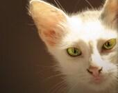 Jaffa cat - 6x9 special listing for mfmandel