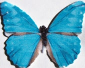 24 Blue Butterfly Paper Embellishment For Scrapbooking, DIY Kid Projects, Weddings, Baby Showers, Wall Decor, ACEO, Altered Art, Photo Props