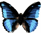 24 Black And Midnight Blue Butterfly Paper Embellishment For scrapbooking, DIY weddings, DIY butterfly school kits, butterfly baby showers