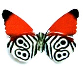 24 Red, Black & White Butterflies for Scrapbooking