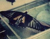 Take Flight - Original Polaroid Image Transfer in 8x10 archival mat