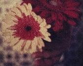 Gerber Daisies 01 - Original Polaroid Image Transfer in 8x10 Archival Mat - CLEARANCE