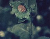 Himilayan Blue Poppy - Original Polaroid Image Transfer in 8x10 Archival Mat