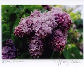 Set of 4 Lilac Photo Cards