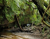 A Touch Of The Rain Forest, Burralow, Bilpin, New South Wales, Australia, 6x9 Photograph