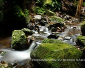 Creek Bed Photograph, Mount Wilson, New South Wales, Australia, Nature, 9X6 Photograph