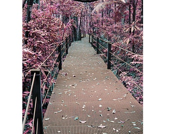 Pink Dreamscape, Forest Walk Photograph, Port Macquarie, New South Wales, Australia, 9X6 Photograph, Home Decor, Wall Art