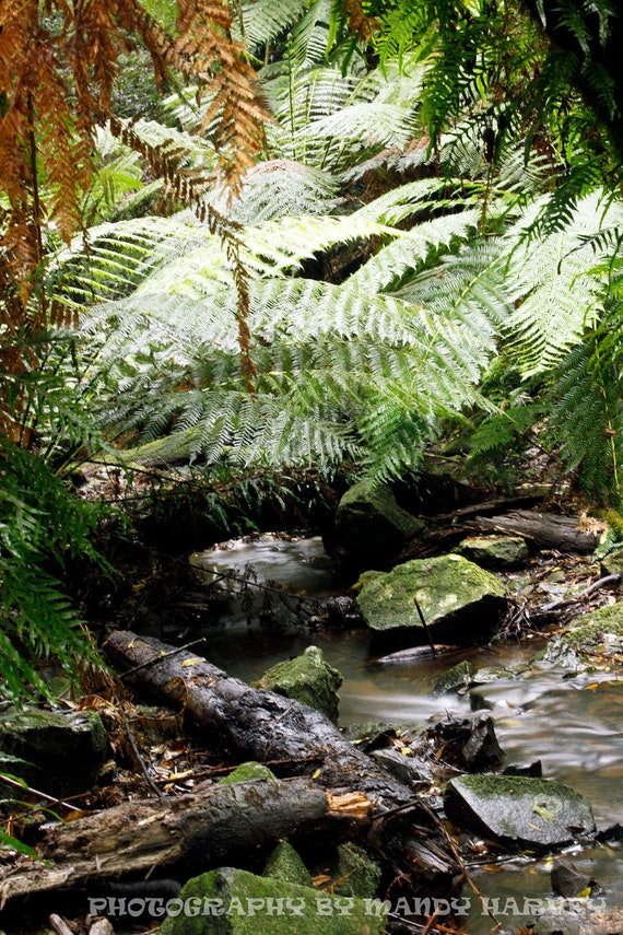 Mount Wilson Creek Bed Photograph, New South Wales, Australia, Nature, 9X6 Photograph