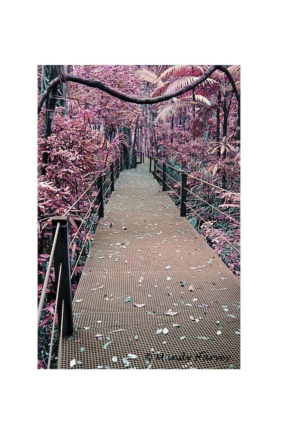 Pink Dreamscape, Forest Walk Photograph, Port Macquarie, New South Wales, Australia, 9X6 Photograph, Home Decor, Wall Art