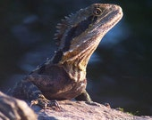 Mysterious Water Dragon - photo print, 8x10 inches (20x25cm)
