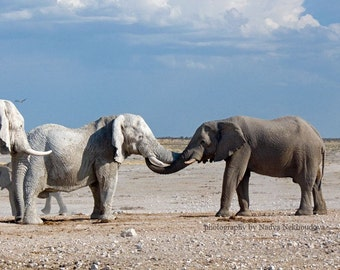 Elephant Meeting - photo print 8x10 inches (20x25cm) - fine art wildlife photography African safari animals