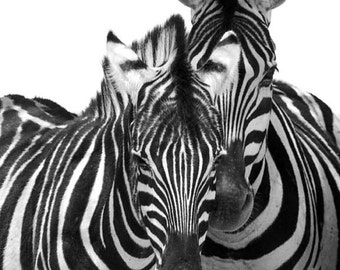 Two Zebras - black and white photography, abstract photo, zebra art, zebra print, safari animal, nursery decor, African art, african print