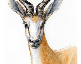 African antelope - Springbok portrait - Art Print from Watercolour and Ink Painting - 5x7 OR 8x12inches - wildlife art