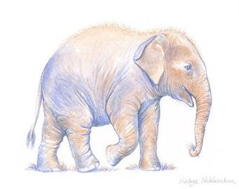 Baby Asian Elephant - 5x7inch Art Print - FAE Elephant Hospital - art for charity