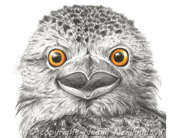 Tawny Frogmouth - 8x8 inches (20x20cm) Art Print - Not an Owl - Australian wildlife art, watercolour print, woodland bird, nature decor