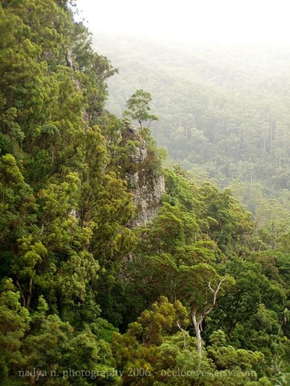 Rainforest Guardian - signed photo print, size 8x10 inches (20x25cm) - fine art nature landscape photography from Australia