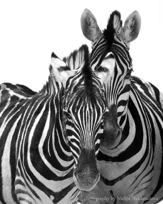 Two Zebras - black and white photography, abstract photo, zebra art, zebra print, safari animal, nursery decor, African art, african print