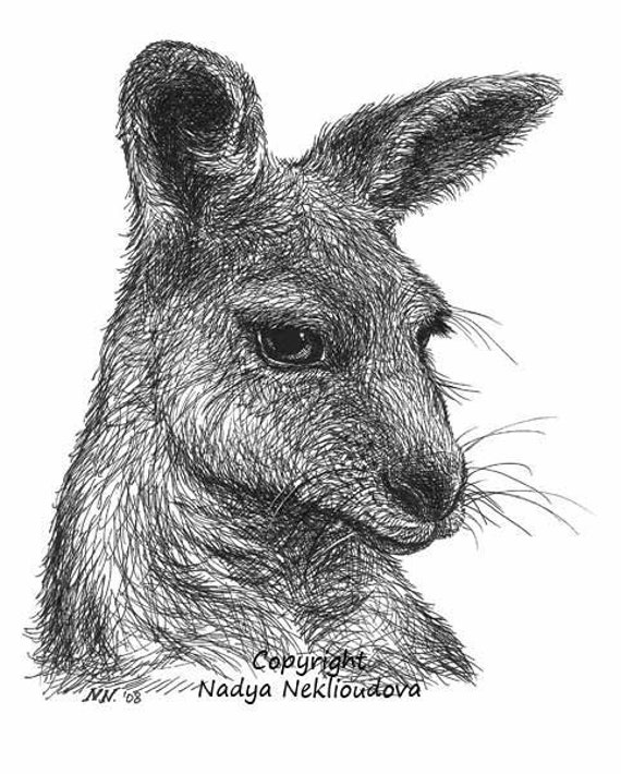 Australian Wildlife Drawings Australian Animal Wildlife