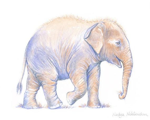 Baby Asian Elephant 5x7inch Art Print FAE Elephant