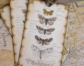 French Butterfly Moth Tags - Vintage  Moth Specimen Tags - Gold, Brown -Set of 3