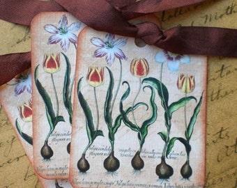 Tulip Tags - Botanical Tulips Gift Tags - VintageTulip Bulbs - Gardening Tags -Set of 3