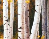 Giclee Print - Fall Quaking Aspen Trees - White Gold