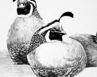 Christmas Card - California Quail - Wildlife