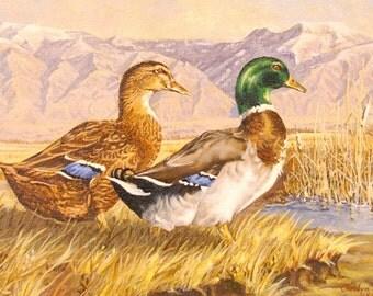 Print - Giclee - Ducks - Mallard -In the Wild