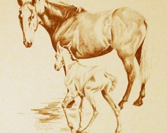 Christmas Card - Mare and Colt