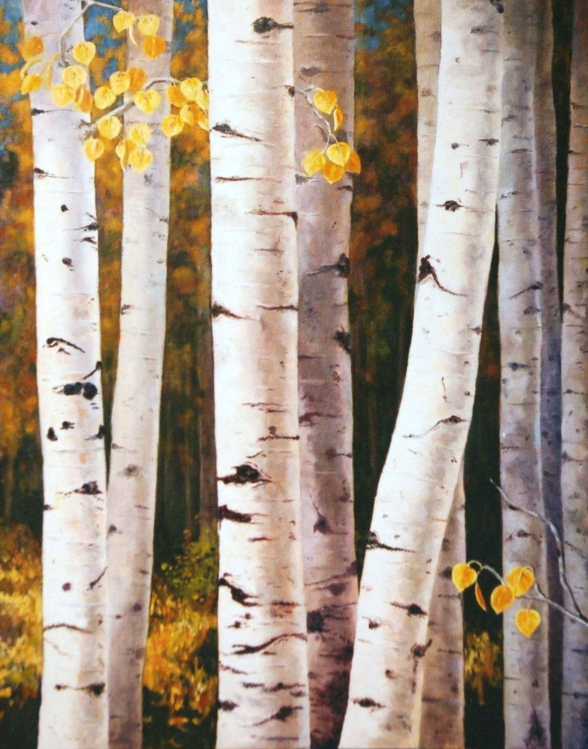 Paper Birch Full Tree