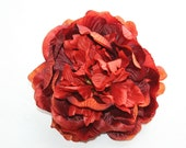 Rustic Red Peony - 6-7 inches