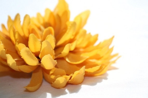 Golden Chrysanthemum   -- mum --