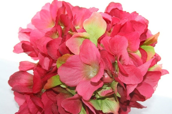 45 Large Bright Pink and Green Hydrangea Blossoms