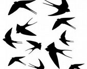 assorted swallows, wall graphic decals