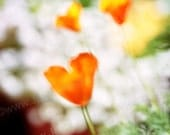 Tangerine Orange Poppy Heart - Oz Inspired Orig Photo of Flower in Spring Garden- Valentines Day Impressionistic By Jean Lannen