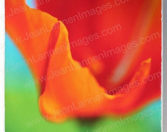 OOAK Orange Poppy-Orig Altered Photo on Canvas 8x8 Spring Summer Flower Tangerine Red Orange,Wizard of Oz, Chartreuse by Jean Lannen