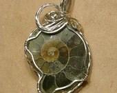 Madagascar Ammonite Pendant