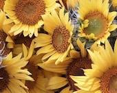 Photo Notecard - Sunflowers