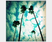 Heavenward: a inspiring square fine art photograph of four tall, skinny pine trees reaching toward turquoise sky with clouds