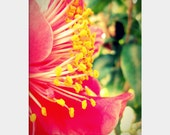 Camellia Profile: macro floral fine art photograph print of side view of hot pink flower petals, mustard yellow stamen, and green leaves