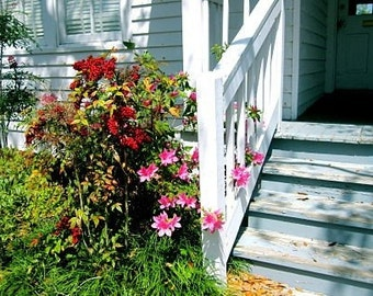 Front Stoop Photo, Front Porch Photograph, Front Steps, Deep South Photo, Southern Hospitality, White Green Red Art, Spring Home Decor